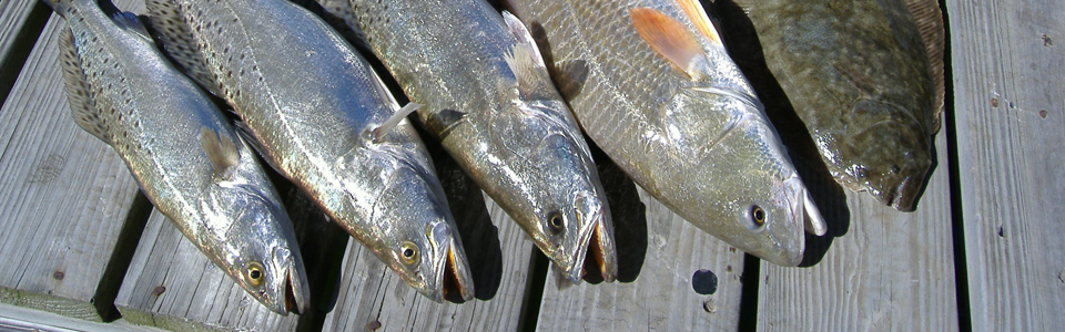 Trophy Trout, Redfish, Flounder and more
